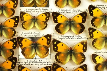 Flutter - Lyndall Phelps